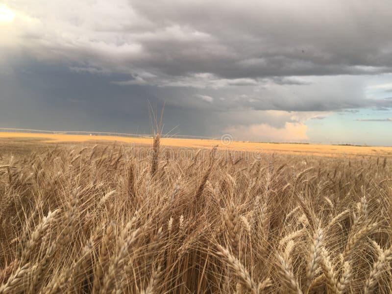 Regen naar het water brengen van de gewassen royalty-vrije stock afbeelding