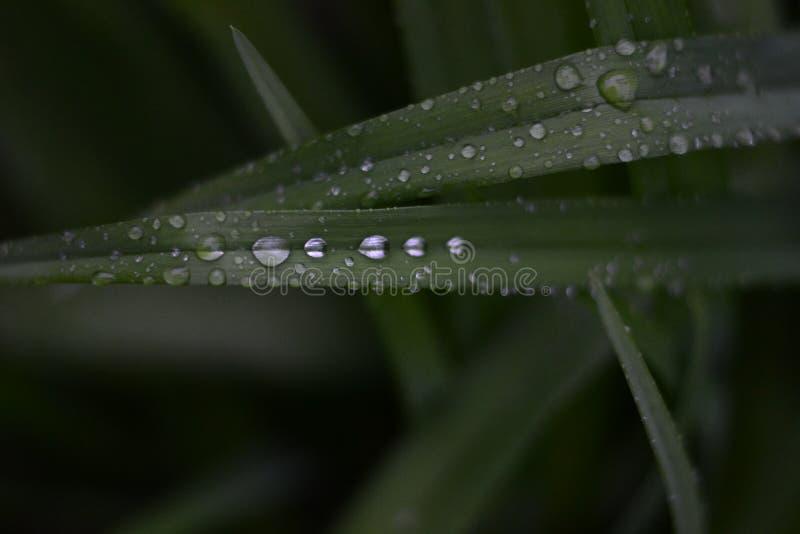 Regen op Bladeren royalty-vrije stock afbeelding