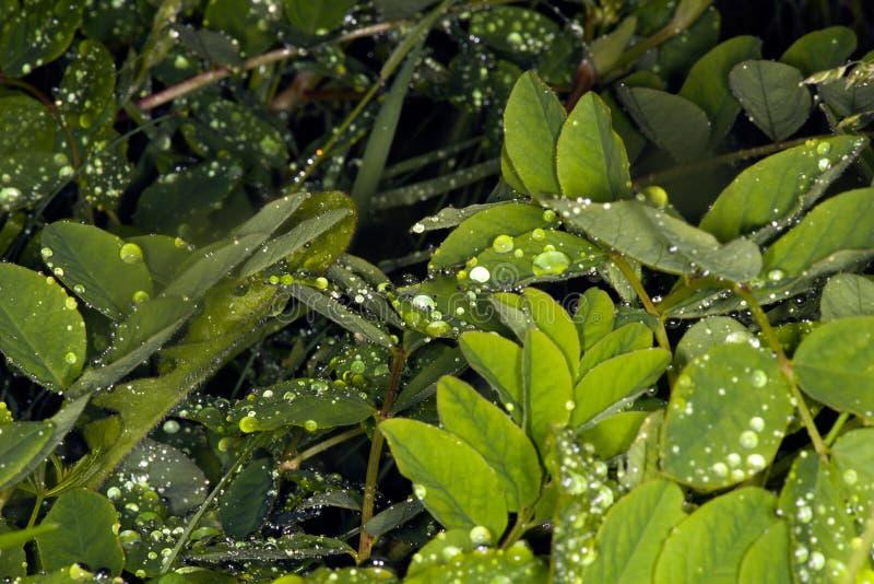 Regen op bladeren Møn, Denemarken royalty-vrije stock fotografie