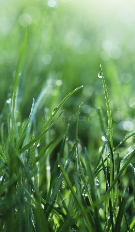 Regen op gras royalty-vrije stock foto
