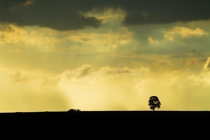 Regen op het gebied met zonsondergang stock fotografie