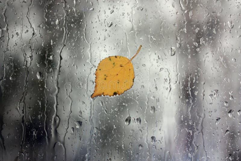 Regen op venster met blad stock afbeeldingen