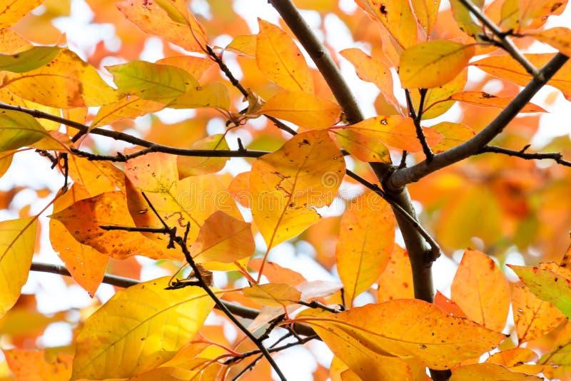 Regen schädigender orange und gelber Autumn Leaves lizenzfreie stockbilder