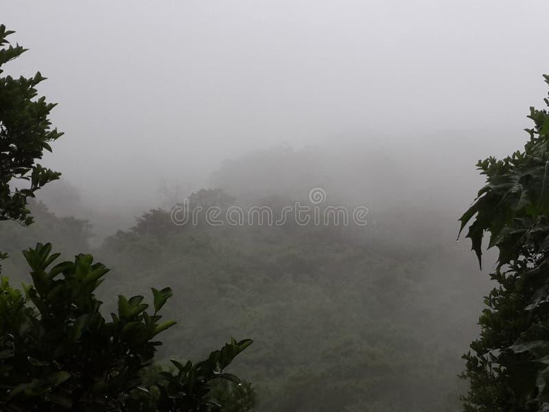 Regen-Wald lizenzfreie stockbilder