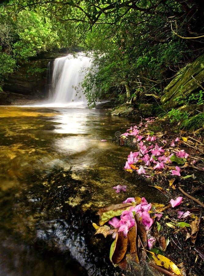 Regen-Waldwasserfall und -blumen stockfotos