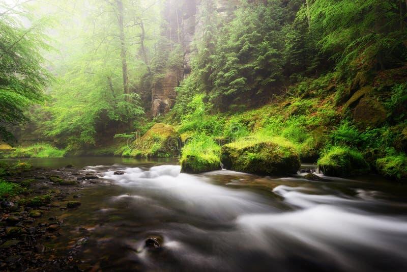 Regenachtig de herfstseizoen Riviermening in Edmund Gorge van het Boheemse Nationale Park van Zwitserland, Tsjechische republiek royalty-vrije stock foto