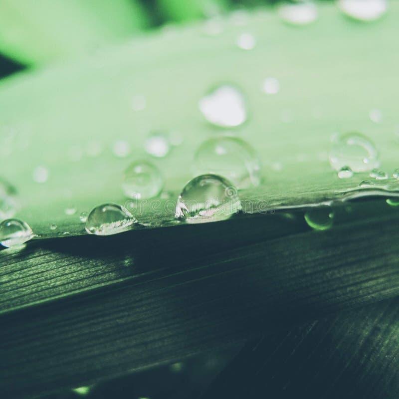 Regenachtig gras royalty-vrije stock fotografie