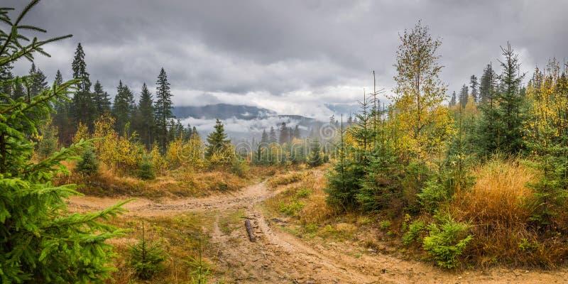 Regenachtig landschap met bos royalty-vrije stock afbeeldingen