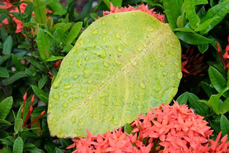 Regenachtig seizoen in Thailand royalty-vrije stock afbeeldingen