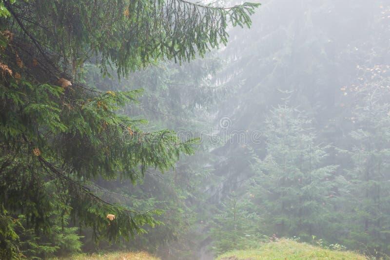 Regenachtige Bos en Mist royalty-vrije stock fotografie