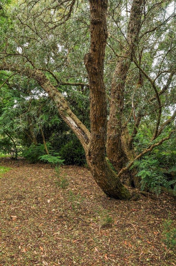 Regenachtige dag in het Park Wilson australië royalty-vrije stock foto's