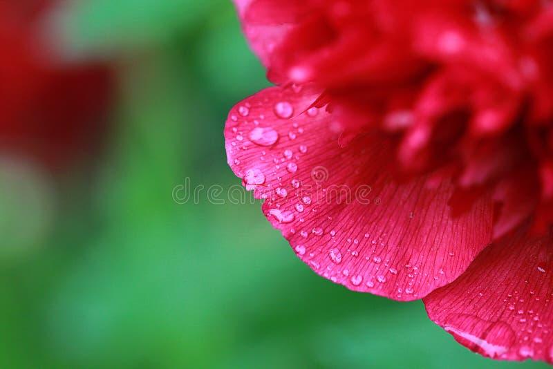 Regenachtige dag op de tuin royalty-vrije stock afbeelding