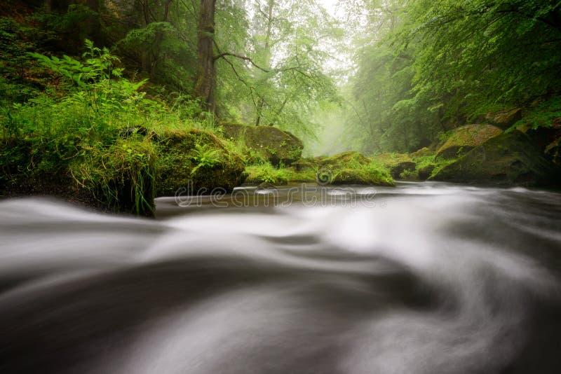Regenachtige de herfstrivier in Edmund Gorge van het Boheemse Nationale Park van Zwitserland, Tsjechische republiek royalty-vrije stock afbeelding