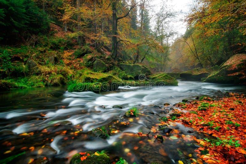 Regenachtige de herfstrivier in Edmund Gorge van het Boheemse Nationale Park van Zwitserland, Tsjechische republiek royalty-vrije stock afbeeldingen