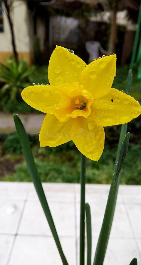 regenachtige lente stock afbeeldingen
