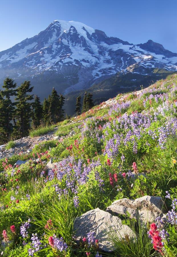 Regenachtigere Wildflower Voordeel stock afbeelding