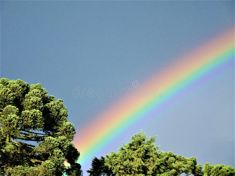 Regenbogen über Araukarienkiefern in Brasilien stockbild