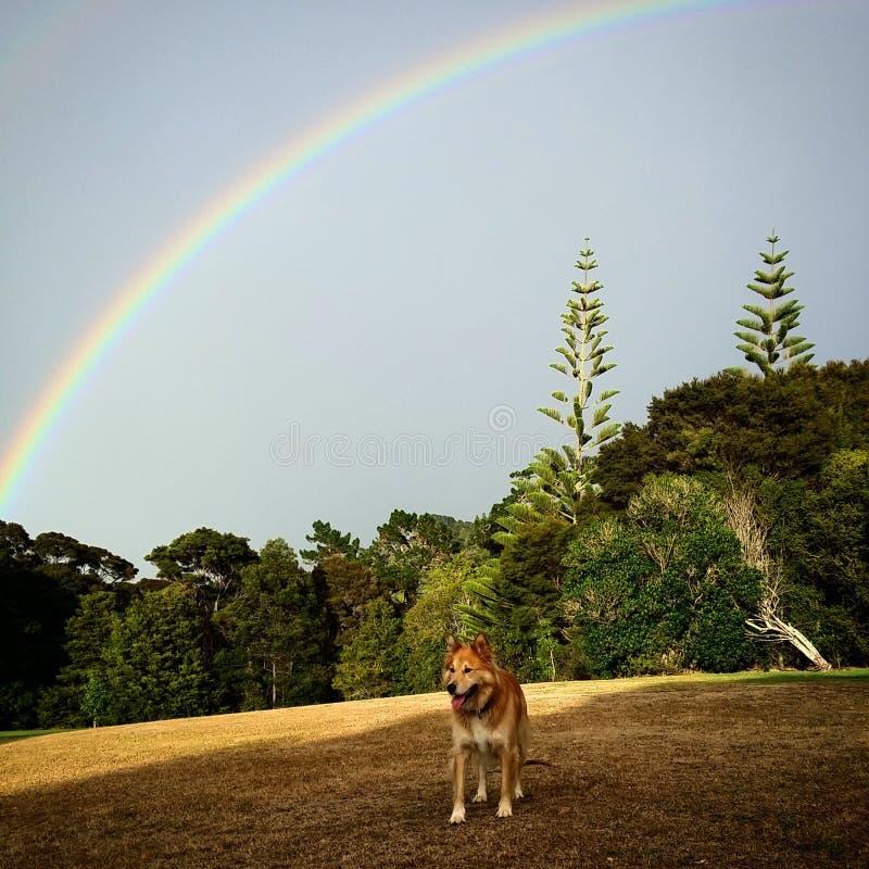 Regenbogen über Bäumen stockfotografie