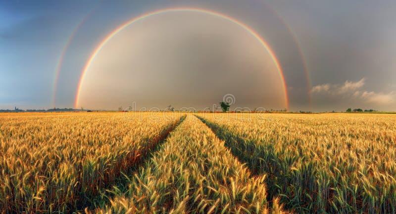 Regenbogen über Weizenfeld, Panorama stockfotos