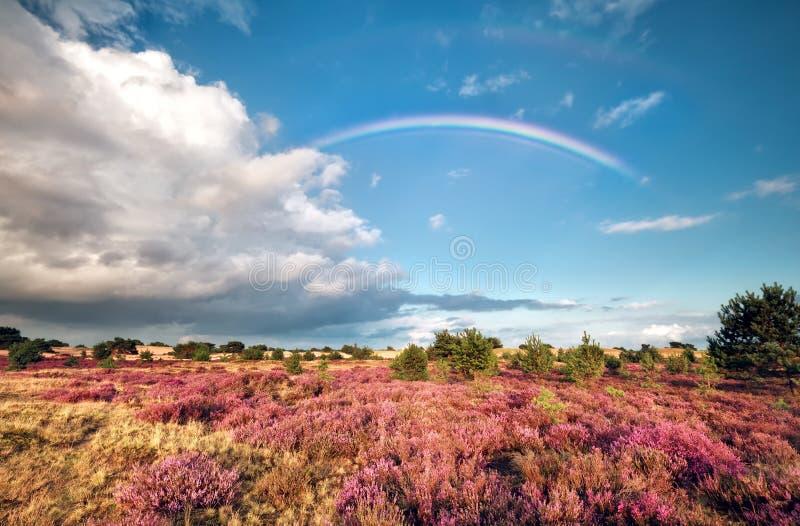 Regenbogen über Wiese mit blühender Heide lizenzfreies stockbild