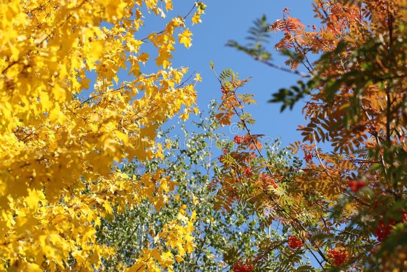 Regenbogen des Herbstes stockbild