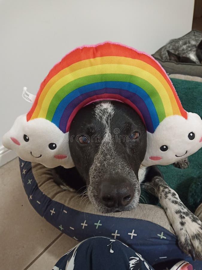 Regenbogen doggo, zum Ihres Tages zu erhellen lizenzfreies stockfoto