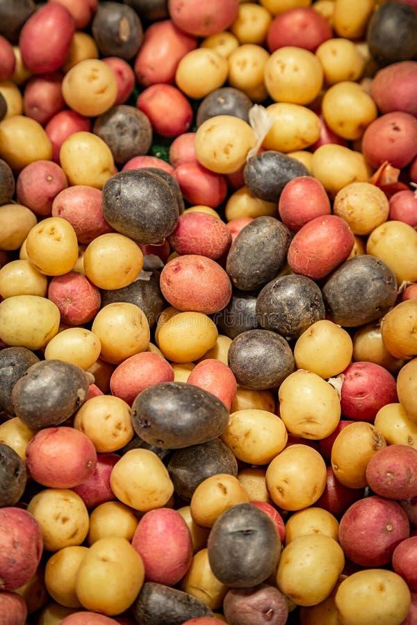 Regenbogen-Kartoffeln stockfotografie