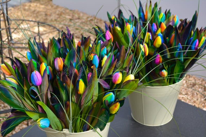 Regenbogen-Tulpen stockfotografie