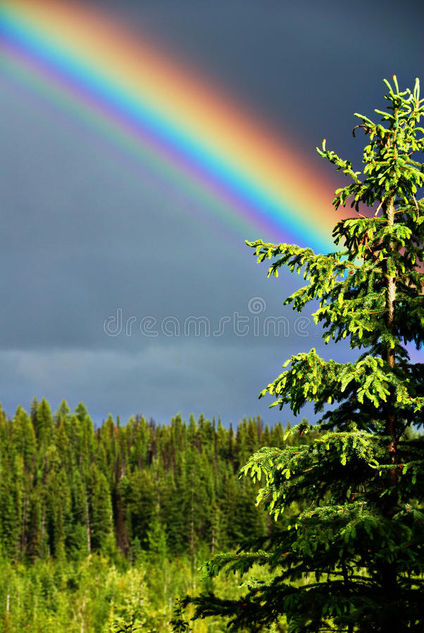 Regenbogen und Baum lizenzfreie stockfotos