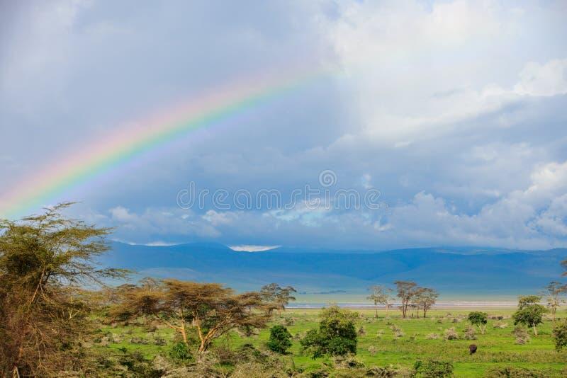 Regenbogen und Elefant stockfotos