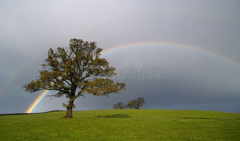 Regenboog stock afbeelding