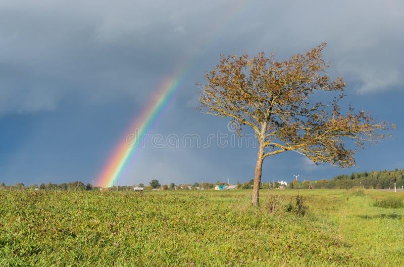 Regenboog en boom stock afbeelding
