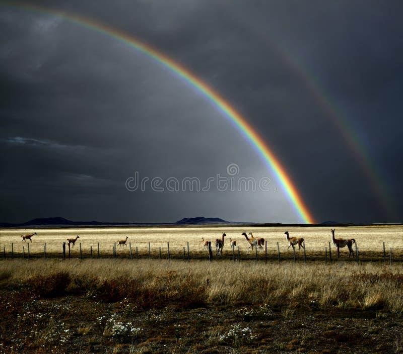 Regenboog en Guanacos stock fotografie