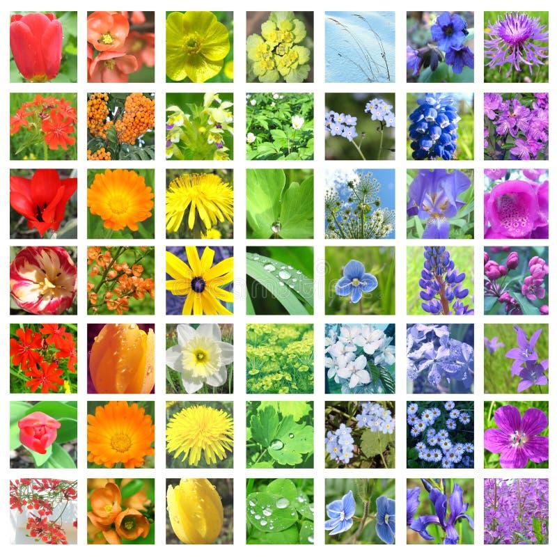 Regenboog gekleurde bloemcollage stock afbeeldingen