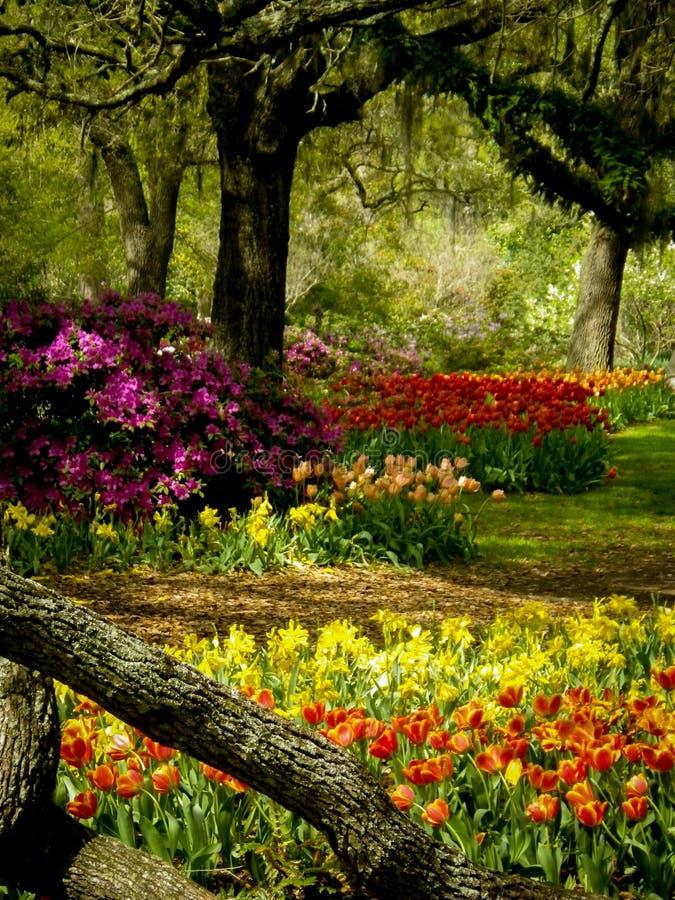Regenboog gekleurde Tulpen en Azalea's in het park royalty-vrije stock fotografie