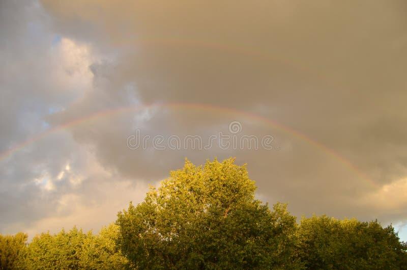 Regenboog na regen over bomen royalty-vrije stock afbeelding