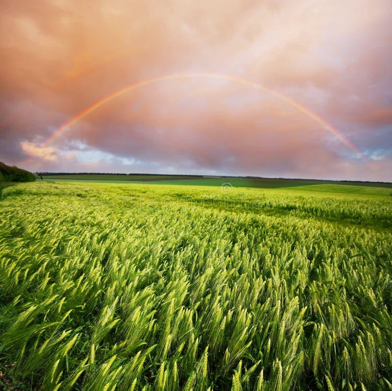 Regenboog op gebied stock foto's