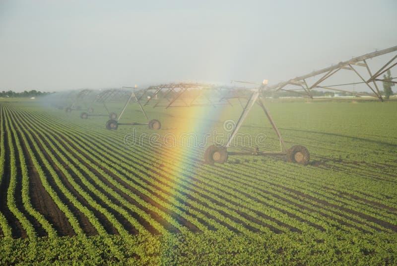 Regenboog op sprenkelinstallatie stock afbeelding