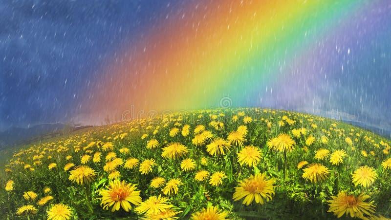 Regenboog over bloemen stock foto's