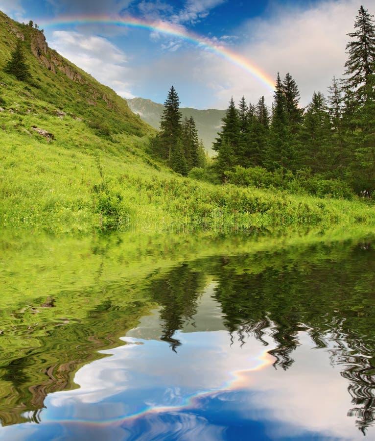 Regenboog over bos stock foto