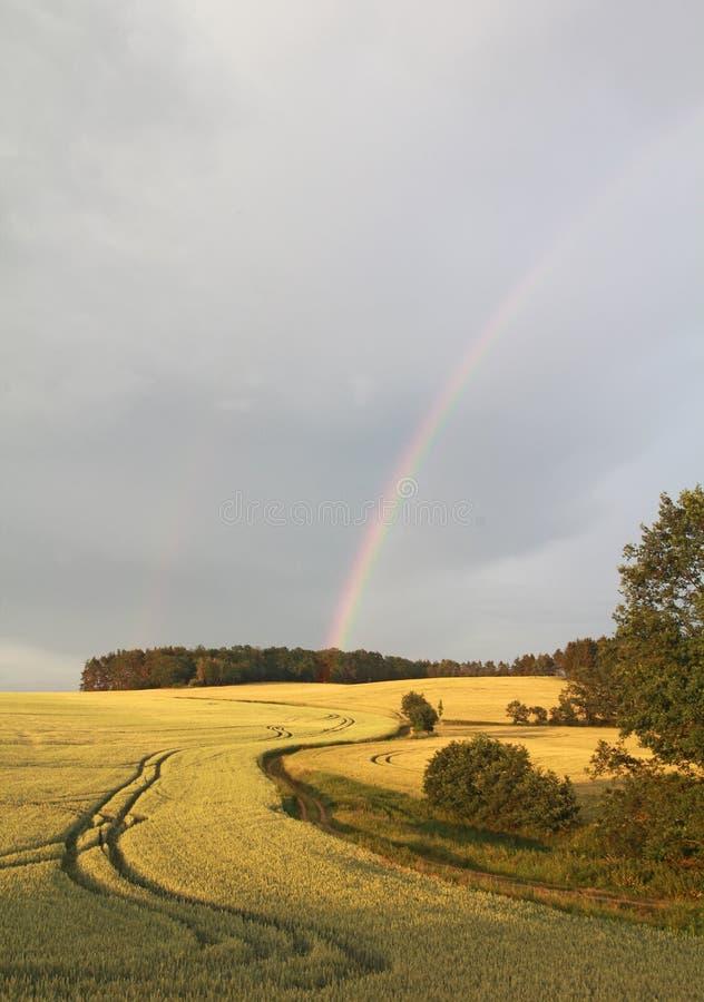 Regenboog over een gebied van tarwe royalty-vrije stock foto's