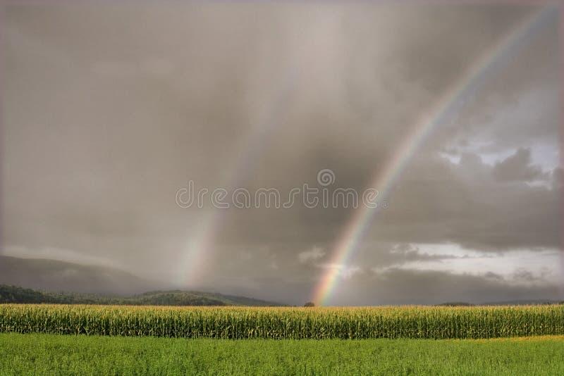 Regenboog over een graangebied royalty-vrije stock foto