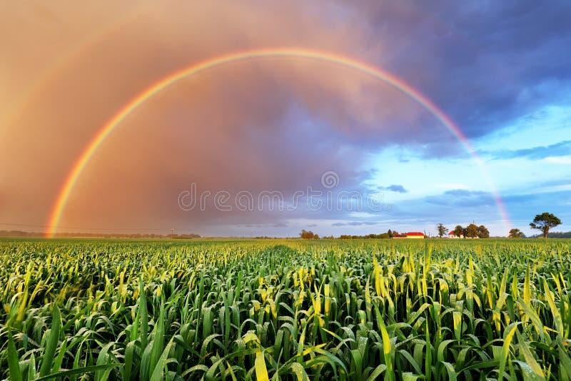Regenboog over tarwegebied, aardlandschap stock fotografie