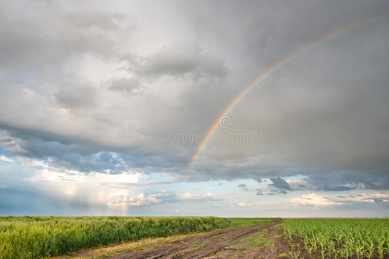 Regenboog over tarwegebieden stock afbeeldingen