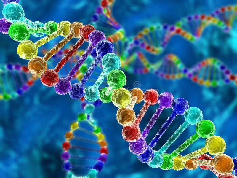 Regenboogdna (deoxyribonucleic zuur) vector illustratie