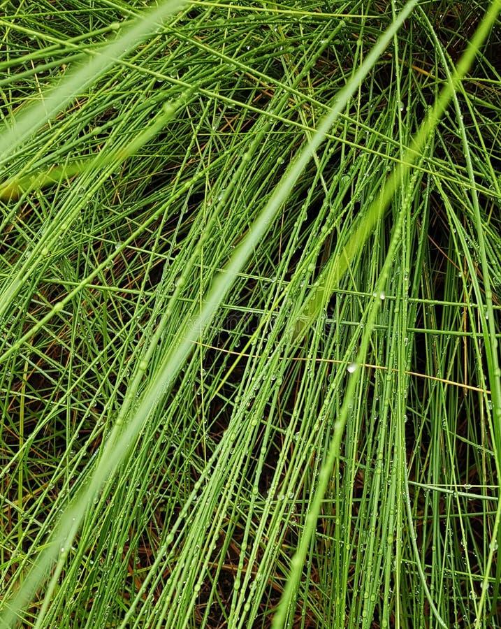 Regendaling op groen gras royalty-vrije stock afbeeldingen