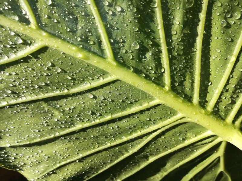 Regendalingen, blad, bladeren, water, aard stock foto