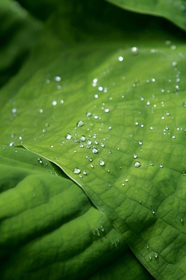 Regendalingen op een groen blad worden gepareld dat royalty-vrije stock foto's