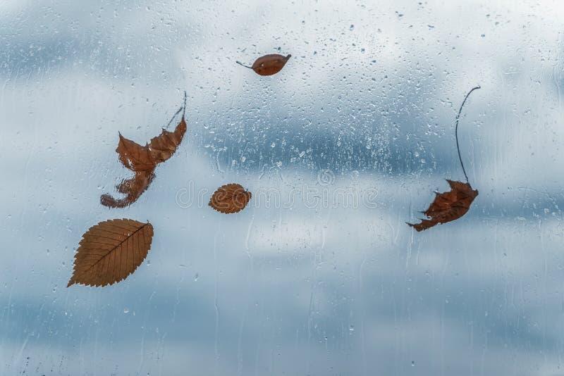 Regendalingen op nat venster en gevallen bladeren erachter Concept guur weer, seizoenen, de herfst abstracte achtergrond stock foto's
