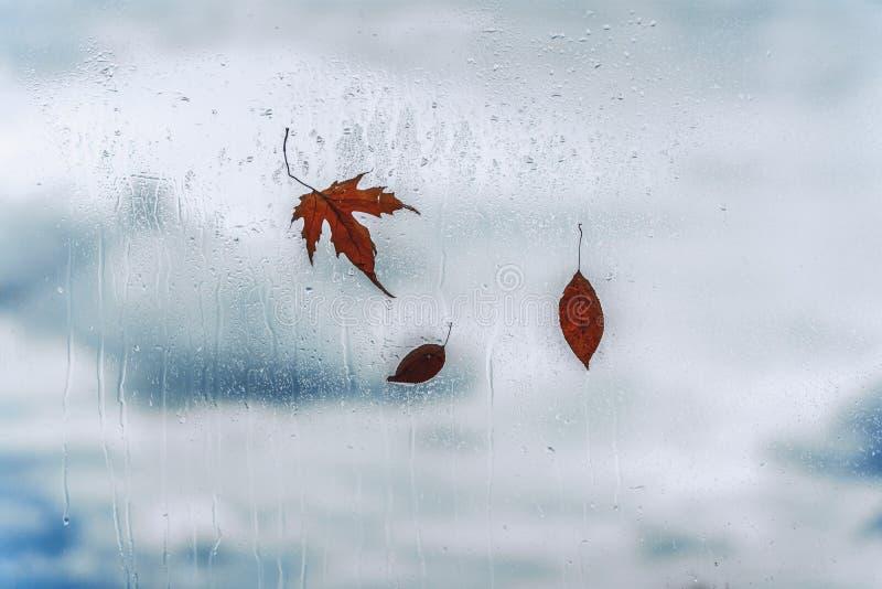 Regendalingen op nat venster en gevallen bladeren erachter Concept regenachtig weer, dalingsseizoenen abstracte achtergrond royalty-vrije stock foto